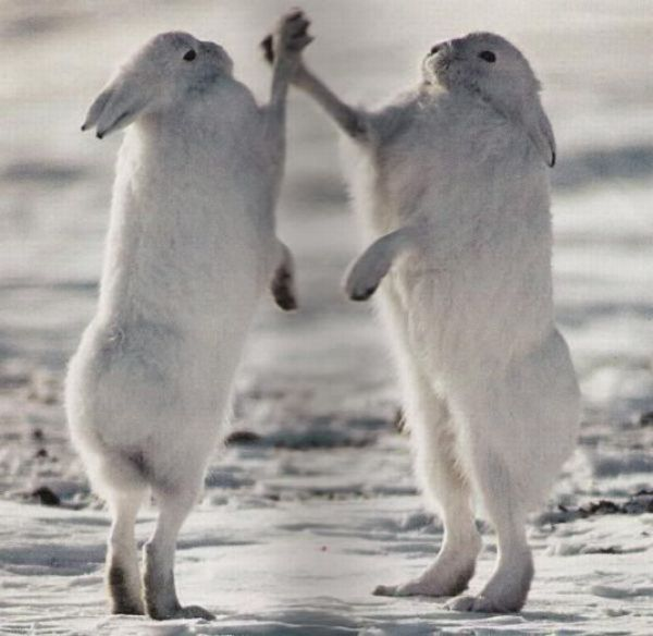 high-five-bunnies