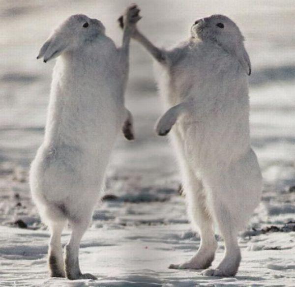 high-five-bunnies