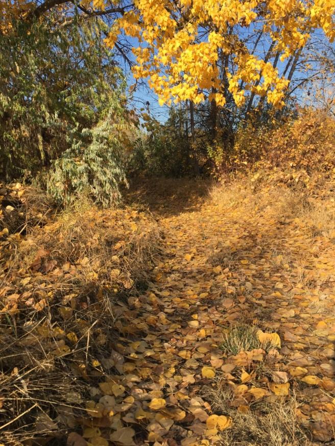 Chamna Chase - golden trail